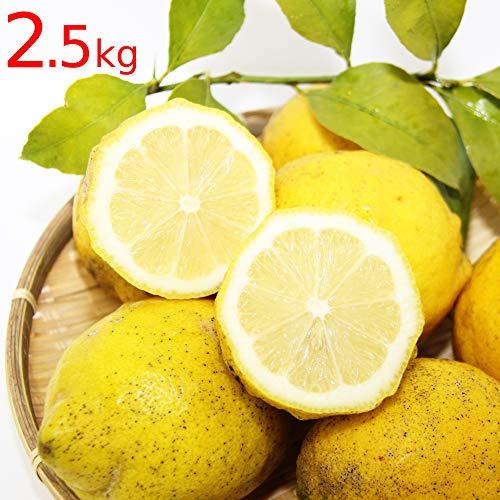 農園直送 広島県産 レモン 約2.5kg サイズいろいろ 皮まで食べられます 国産レモン 広島県呉市豊島 竹川農園