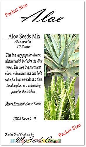 20 x Aloe Seeds Mix - Excellents Plantes succulentes Greenhouse, maison d'intérieur - Comprend ALOE VERA - Par MySeeds.Co