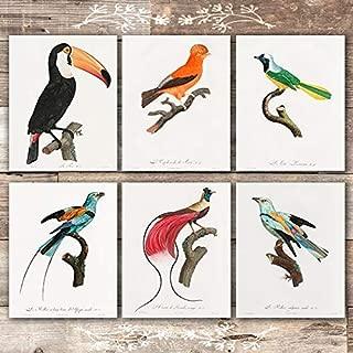 Best bird of paradise print Reviews
