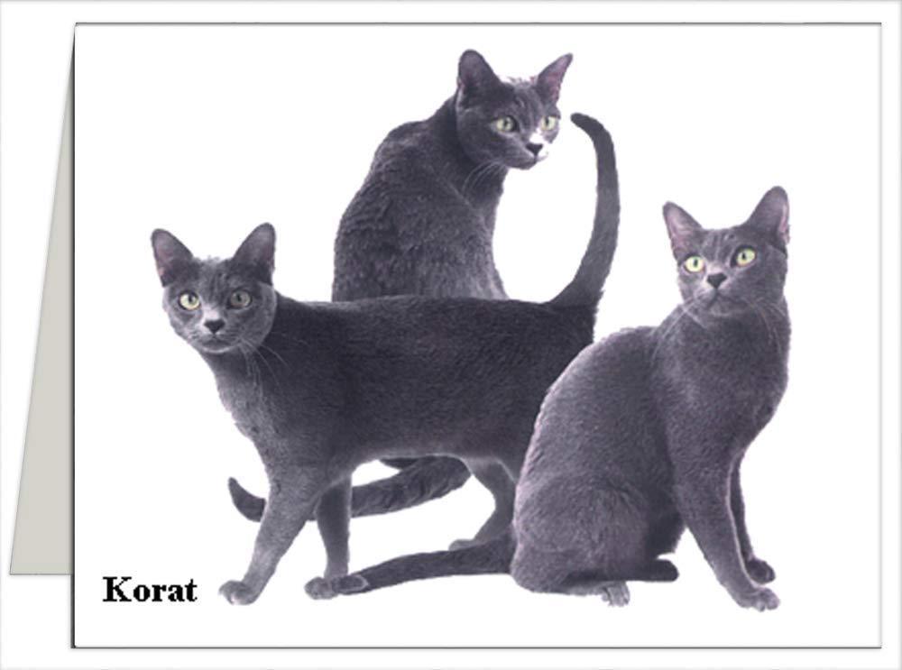 New sales Korat - Cat Note Cards