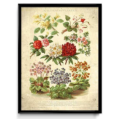 Gewächshaus Blumen Vintage Druck – VP1064UK, Baumwolle, Daybreak, 21 x 30 cm