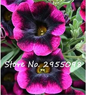 20 Seeds Petunia Kabloom Calibrachoa, mixed bonsai flower seeds, Morning Glory, Pot Plant For Home Garden 6