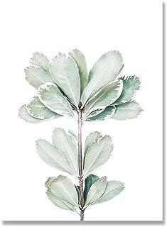 LCSLDW Impression sur Toile Affiches Botanique Toile Peinture Décoration Murale Art Photos Chambre Décoration Décor, Convi...
