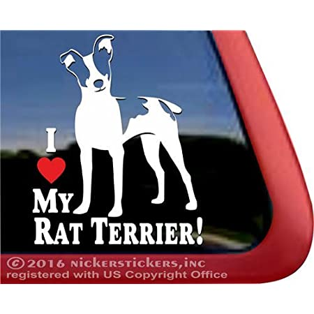 Rat Terrier DadHigh Quality Rat Terrier Vinyl Dog Window Decal Sticker