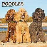 Poodles - Pudel 2021 - 16-Monatskalender mit freier DogDays-App: Original BrownTrout-Kalender [Mehrsprachig] [Kalender] (Wall-Kalender)