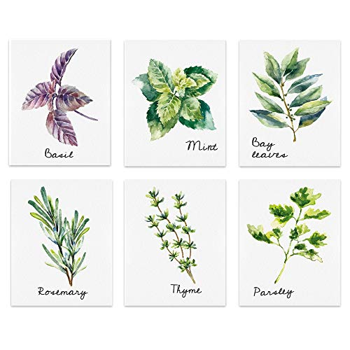 bestdeal depot Wall Art Posters Kitchen Herbs Canvas Poster Home Decoration for Bathroom, Bedroom, Office Unframed Set of 6, 8x10 inches
