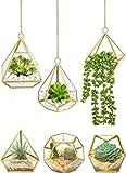 Mkono Hanging Glass Planter
