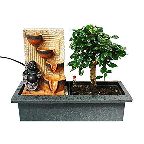 """longxiesheng Indoor-Bonsai mit Zimmer-Brunnen\""""Buddha mit 4 Schalen\"""" - beleuchtet - Easy Care System"""