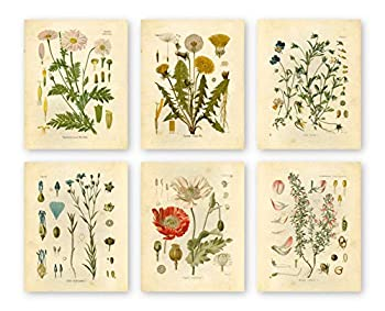 Ink Inc Botanical Prints Wildflower Prints Floral Wall Art - Set of 6 - 8x10 - Unframed