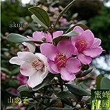 honic di recente utilizzato autentica mirto bonsai bonsai montagna nim sub-albero ottimi 100pcs frutta (tao jin niang)