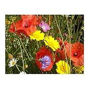 Cornfield annual standard wildflower MeadowMania