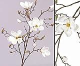 Zweig Deko Magnolien, 4 Blüten weiß, Höhe 107cm - Kunstpflanze Kunstbaum künstliche Bäume Kunstbäume Gummibaum Kunstoffpflanzen Dekopflanzen Textilpflanzen Textilbäume Pflanzen aus Textil Kunststoffpflanzen Plastikpflanze Kunstpflanzenbaum Kunstblumen Deko Blumen
