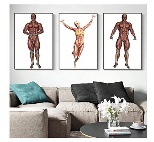 RZHSS Muskelkarte Menschliche Körpermalerei Bildplakat Leinwanddruckmalerei Wandkunst Wohnzimmer Hauptdekoration-40X60Cmx3 (Kein Rahmen)