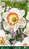 Trompeten-& großkronige Narzissen/Osterglocken 'Pink Charm' weiß - rosa, Blumenzwiebeln für Herbstpflanzung