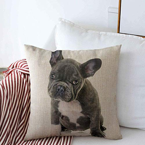 Starodal Decorative Linen Throw Pillow Covers Blue Bouledogue Puppy French Bulldog Front White Gray Canine Cute Dog Domestic Little 16' x 16' Square Cushion Case for Home Decor