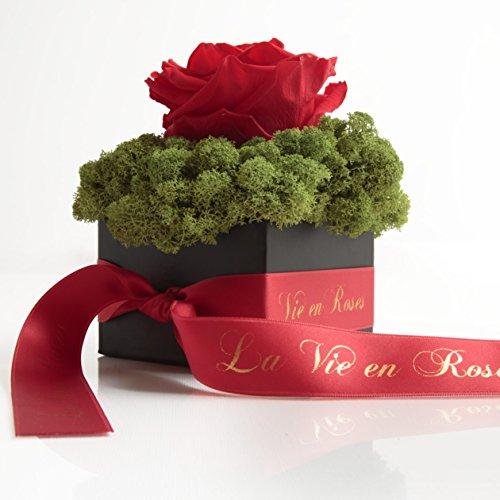 Rosemarie Schulz konservierte Blumen und Rosen, schwarze Flowerbox mit Infinity Rose in Rot und konserviertem Islandmoos haltbar 3 Jahre (12 x 12 cm, Rot)