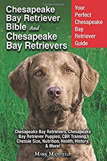 chesapeake bay retriever training tips