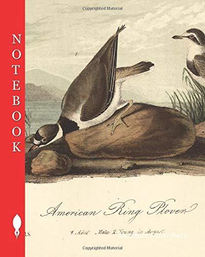 American Ring Plover, American Little Ringed Plover (Charadrius semipalmatus), Signed: J.J. Audubon, J.T. Bowen, lithograph, Pl. 320 (Vol. 5), ... James Audubon: The birds of America: Notebook