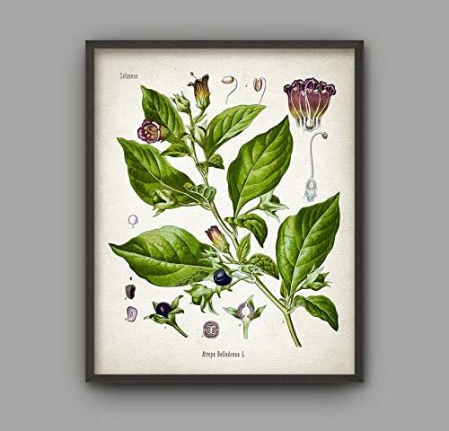 Rac76yd Tödlicher Nachtschatten-Wandkunstdruck, antiker Atropa Belladonna Pflanze, botanische Heimdekoration, Heilpflanze Wandkunst, grüne Ranke