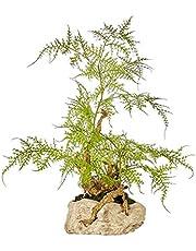 人工観葉植物 パイン人工シーダー、グリーンバリュー装飾ホテルヴィラ人工鉢植えリビングルームポーチ禅装飾シミュレーション植物人工盆栽を歓迎新中国風 造花