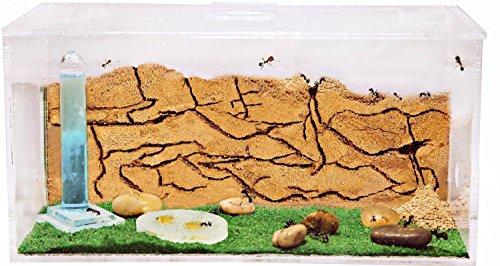AntHouse - Hormiguero Natural de Arena - Kit Inicio Acrílico 20x10x10 cm (Hormigas Gratis)