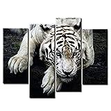Firstwallart - Impresión sobre Lienzo de Foto de Tigre Blanco Tumbado sobre Roca para Moderna decoración de hogar