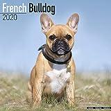 French Bulldog Calendar - Dog Breed Calendars - 2019 - 2020 Wall Calendars - 16 Month by Avonside (Multilingual Edition)