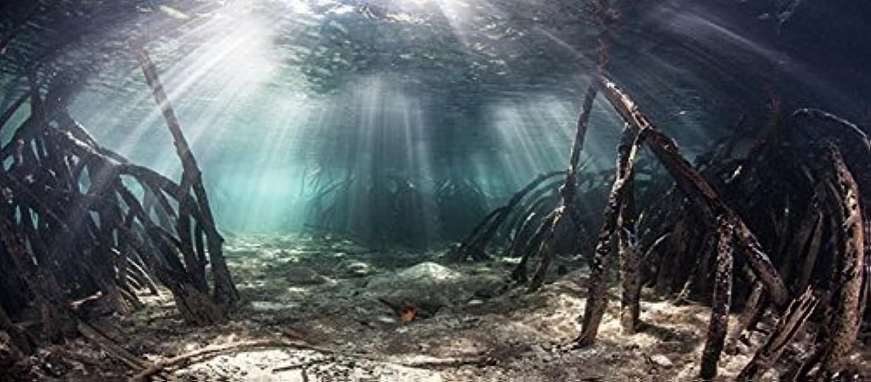 Mangrove with Sunlight Aquarium Background Fish Tank Background (Various Sizes) (24  H x 45  W)