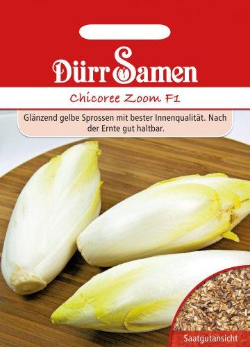 Salatsamen - Chicorée Zoom F1 von Dürr-Samen [MHD 12/2016]
