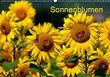 Sonnenblumen (Posterbuch DIN A4 quer)