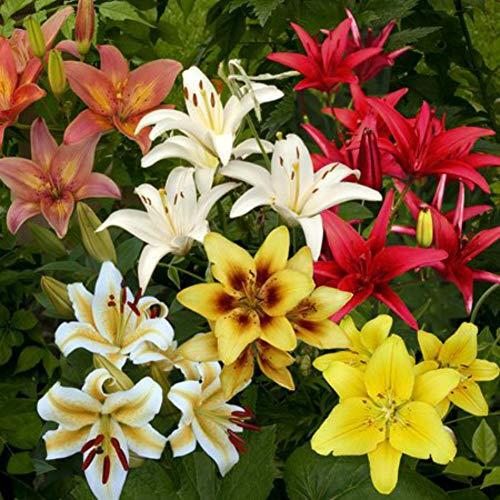 200 Stücke Gemischt Blumensamen