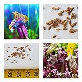 Sarracenia rubra (pianta carnivora)20 semi -  insetti digerito  Tempo di germinazione: circa 2- 4 settimane tasso di germinazione: circa il 40- 70% I semi sono confezionati in sacchetto a chiusura lampo e spediti in busta imbottita!  germinali - le i...