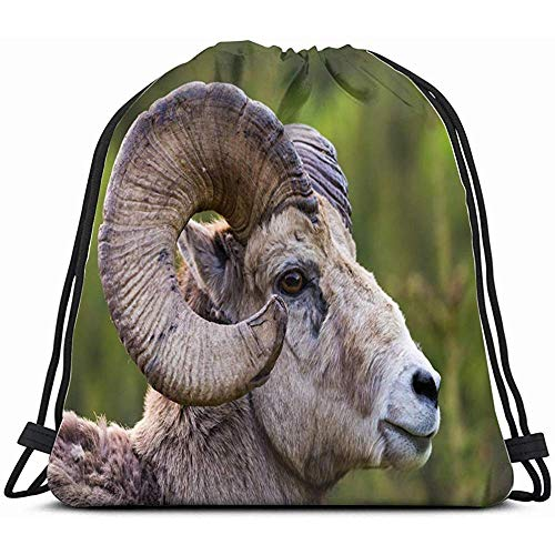 Drawstring Backpack Bag,Bighorn Sheep Ovis Canadensis Close Horns Animals Wildlife Adult Nature Drawstring Backpack Sports Gym Bag For Women Men Children Large Size With Zipper And Water Bottle M