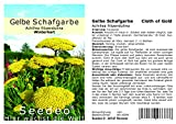 Seedeo® Gelbe Schafgarbe'Cloth of Gold' Achillea filipendulina 200 Samen