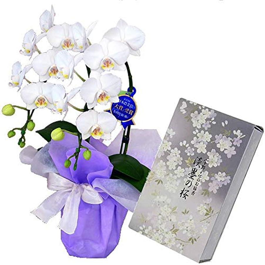 憂鬱妨げる王女ミディ胡蝶蘭 白色 2本立ち 日本香堂のお線香 宇野千代 淡墨の桜 バラ詰 セット