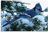 APAZSH Laminas para Cuadros Póster de Animal Blue Jay Birds, póster artístico de Lienzo y póster de Decoracion de impresión de Cuadros artística para Pared 60x90cm x1 Sin Marco