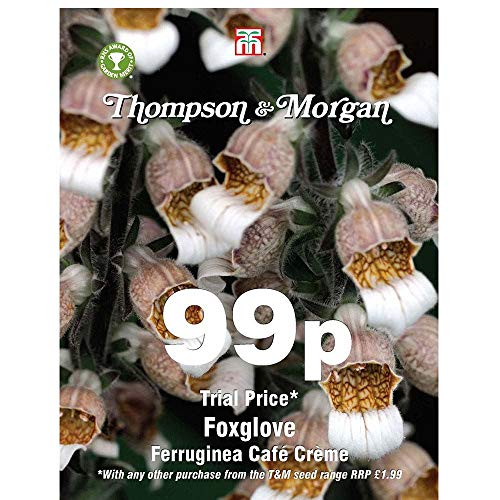 Thompson & ‿Morgan Foxglove Cafe Creme 100 graines