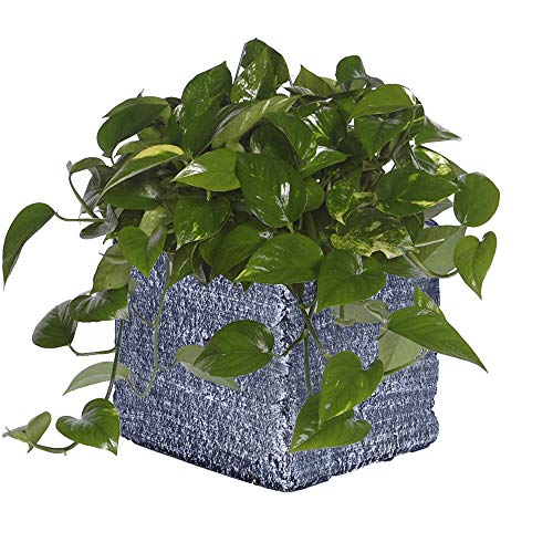 Hetoco Cement Square Succulente Cactus Planter Plant Containers Bloempotten Vensterbank Planter S