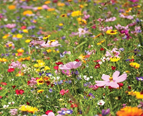 100% Premium Native Scented PERENIAL Wild Flower Seed Meadow Mix Bees Butterflys