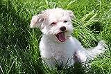 JiaHM Perro Mascota en el césped Pintura por número 40x50cm-No Contiene Marco Pintura Pinturas