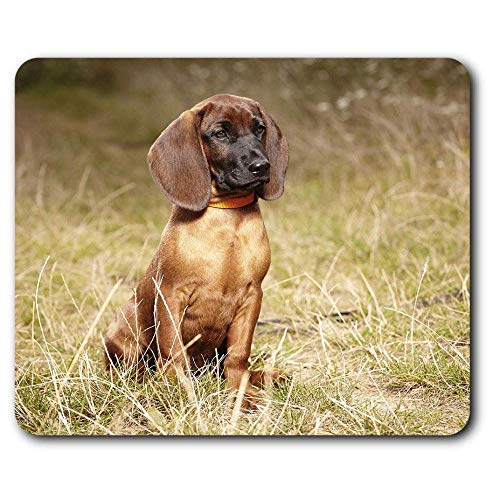 Dqxia Bequeme Mausunterlage Bayerischer Gebirgshund 23 5 X 19 6 cm für Computer und Laptop Büro Geschenkbox