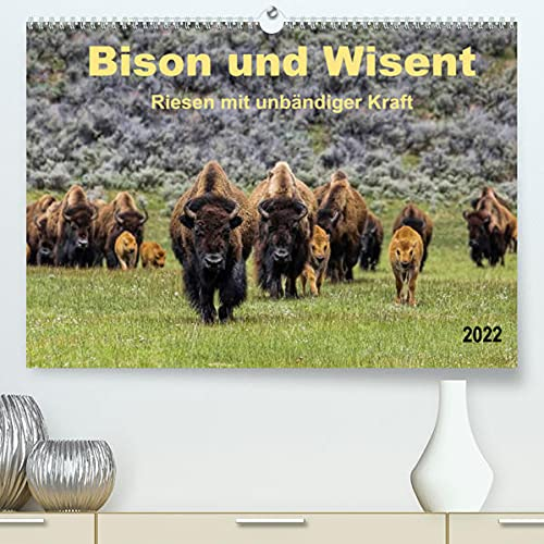 Bison und Wisent - Riesen mit unbändiger Kraft (Premium, hochwertiger DIN A2 Wandkalender 2022, Kunstdruck in Hochglanz): Bison und Wisent, ... (Monatskalender, 14 Seiten ) (CALVENDO Tiere)