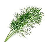 Véritable® Lingot® - Ricarica compatibili con Tutti i Tipi di Orto da Interno (Fiori commestibili, Fiore di zucchine)