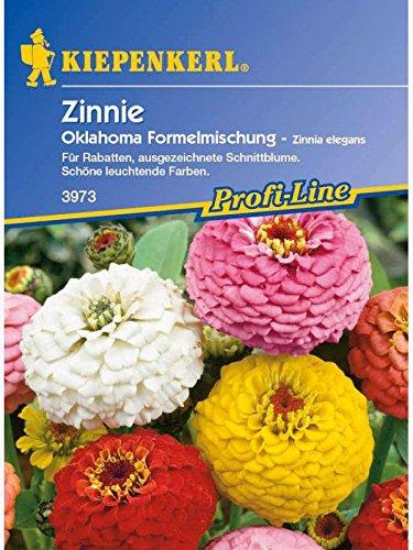 Zinnia elegans Zinnie Oklahoma-Formelmischung