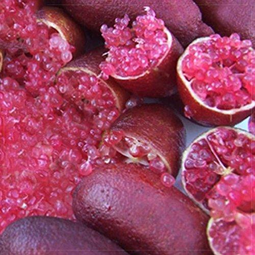 Les meilleurs jardin Graines d'origine importées Red Rose Finger graines Lime Citron vert plantes, 10 graines, emballage professionnel, un must pour jardin plante rare