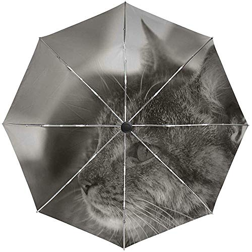 Automatischer Regenschirm Cat Sad Down Face Eyes Travel Praktisch Winddicht Wasserdicht Faltbar Auto Open Close