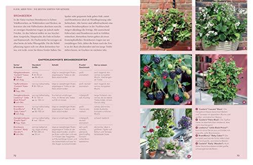 Mein City-Obstgarten: Fruchtiges Naschvergnügen für Balkon & Terrasse (GU Garten Extra) - 4