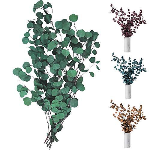 Sporgo Flores secas de eucalipto auténticas, eucalipto secas, ramo de flores secas de alta calidad, planta natural, hojas redondas, vida eterna y fresca, decoración para fiestas