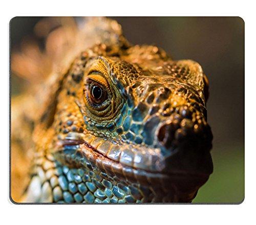MSD Natural Rubber Gaming Mousepad IMAGE ID 26765173 Guana lizard in nature Iguana in exotic zoo terrarium