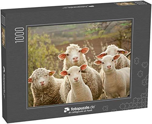 Puzzle 1000 Teile Schafe innerhalb eines Mobs wenden Sich an den Fotografen - Klassische Puzzle, 1000/200/2000 Teile, in edler Motiv-Schachtel, Fotopuzzle-Kollektion 'Tiere'